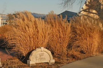ornamental grasses in the fall