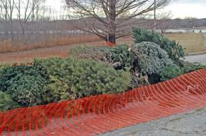 Pile of Christmas Trees