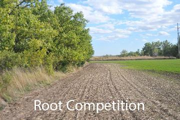root competition example
